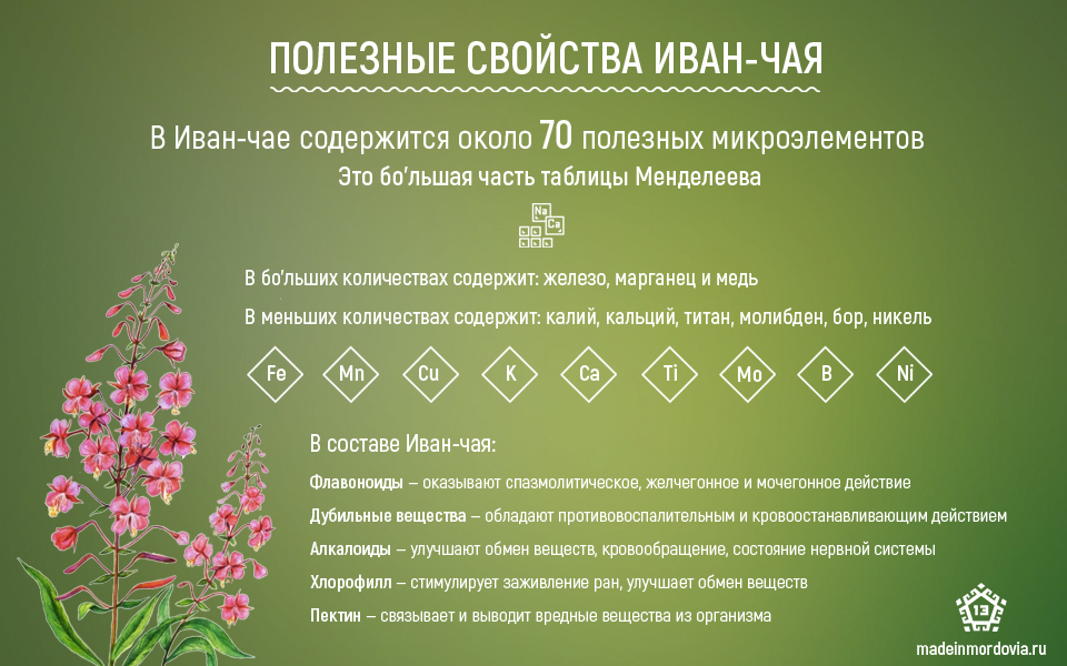 Иван чай иследование в сосетском союзе